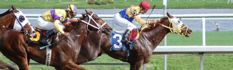 Leading the horse race